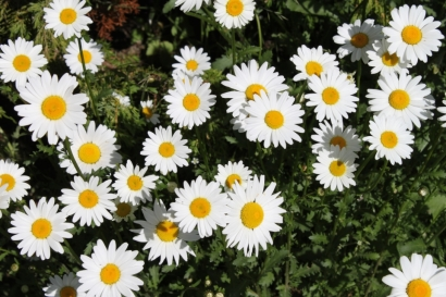 Blomsterprakt i naturreservatet